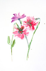 Beautiful wildflowers on white background, watercolor hand drawn on paper