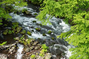 阿寒湖の滝口風景