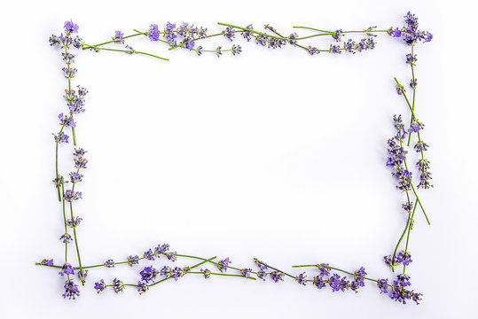 A frame of fresh lavender flowers on a white background. Lavender flowers mock up. Copy space.