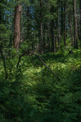 West Fork Trail Sedona Arizona