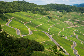 Kurvenreiche Straße und Wege führen durch die grüne Weinbergslandschaft