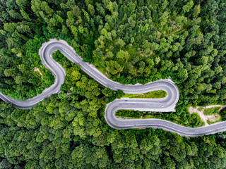 Dense forest with winding road