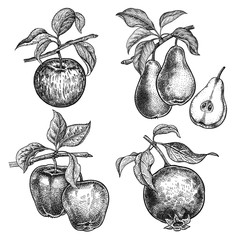 Fruits apples, garnet and pears.