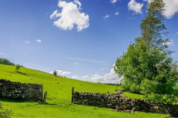 A gap in a dry stone wall with a windswept tree.