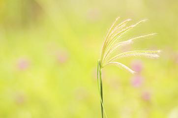 Grass flower plants on sunset light blurry backgrounds