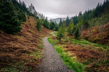 Path through Whinlatter Forest