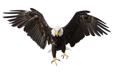 Photo sur Plexiglas Aigle Bald Eagle flying with American flag