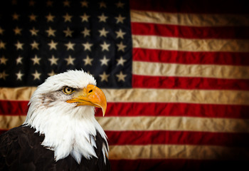 Fototapete - Bald Eagle with American flag