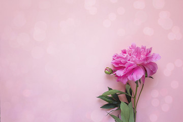 Romantic background with peony on pink.