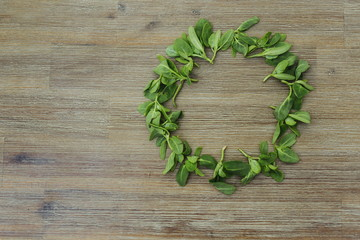 Circle shape frame made of orach saltbush green leaves on wooden background. First spring summer crop. Healthy food, gardening. Wild organic edible plants. Copy space