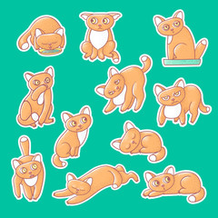 Textured color vector set of illustration sticker of cute emotional ginger kitten. The face of the cat reflects different emotions fear, anger, and love. Pussycat is sleeping, drinking from bowls.