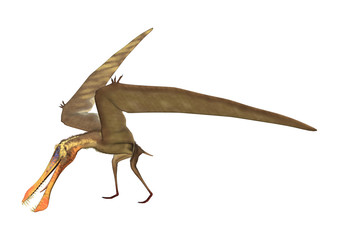 3D Rendering Pterodactyl Anhanguera on White