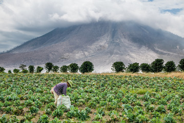 SINABUNG VOLCANO, SUMATRA, INDONESIA - September 28, 2016: Unidentified woman farmer ignores the volcano eruption and continues her work. Eruption of Sinabung killed several people in recent years