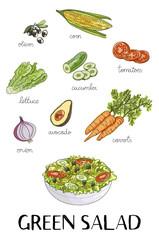 Illustration of hand drawn green salad ingredients