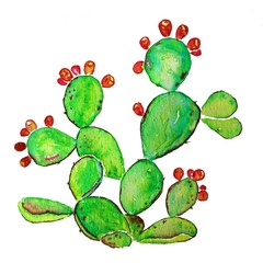 Ripe Prickly pear cactus with fruits. Watercolor raster illustration
