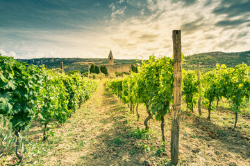Toned image of Slovenia vineyard and countryside