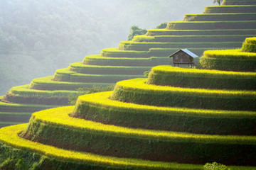 Printed roller blinds Rice fields Vietnam rice field on terraced mountain green and cottage on the farming Agriculture of Vietnam.