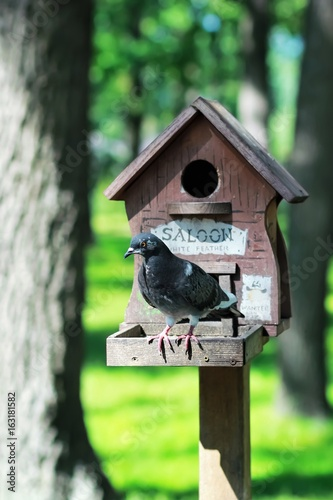 Diy Creative Hand Made Wooden Bird Housebird Feeder With A Pigeon