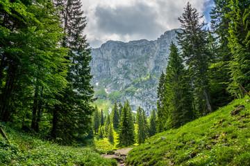 Natur, wandern, freizeit, urlaub