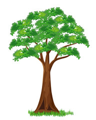 tree vector design