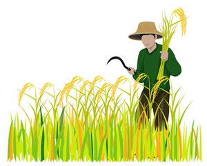 farmer with rice vector design