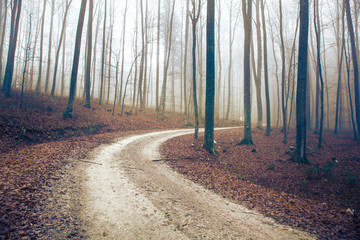 Wall Mural - Mysterious foggy brown colored forest road.