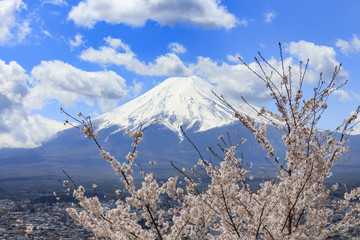 Cherry blossoms in spring and Mount Fuji