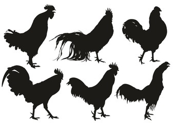 Silhouettes of roosters.