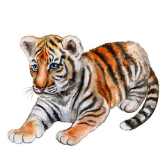 Little tiger on white background. Animal. Watercolor