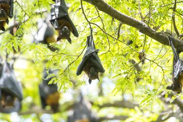 Bats hanging upside down in tree