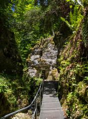 Tempel im tiefsten Jungle