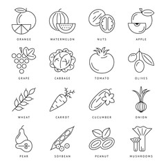 Digital black vegetable icons set infographics drawn simple line art, onion squash pear orange apple grape carrot wallnut peas watermelon cabage, flat, organic vegetarian food