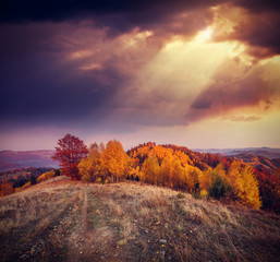 Wall Mural - The sun's rays illuminate colored trees. Dramatic and picturesque morning scene.