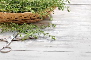 estragon frais sur table de jardin avec paire de ciseaux