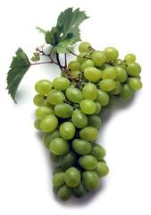 Raïm de taula Table grape ブドウ Tafeltraube Uve da tavola Raisin de table Video Uva de mesa grapes