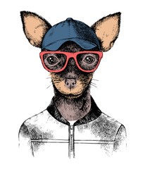 Hand drawn toy terrier hipster