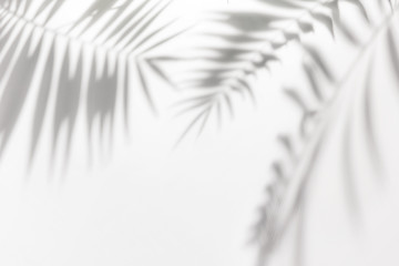Acrylic Prints Palm tree Shadows from palm trees on a white wall