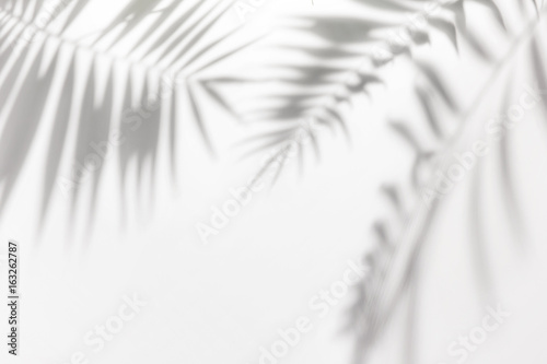 Wall mural Shadows from palm trees on a white wall