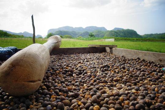 Traditionelle Kaffeeherstellung auf einer Plantage in Kuba