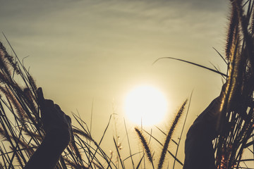 Close up on hands of woman opening high grass to sunlight in the island of Koh Phangan, Thailand