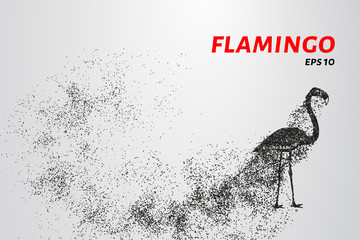 Flamingo of particles. Flamingo consists of circles and points.