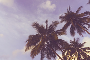 Exotic summer tropical palm tree background
