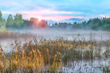 Misty morning on the bog in Russia