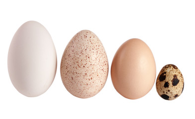 Goose turkey chicken and quail eggs isolated on white background. clipping path