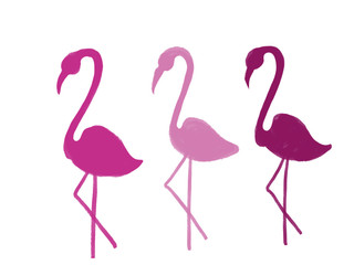 Colorful drawn bright flamingos for greeting card or advertisement on white background, isolated cartoon illustration painted by pencil chalk on white background, high quality