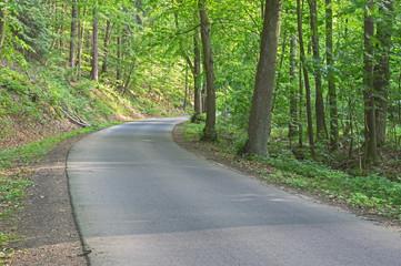 Asfaltowa droga przez las.