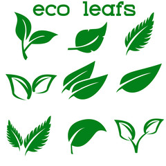 Green Leaves Collection. Vector Illustration