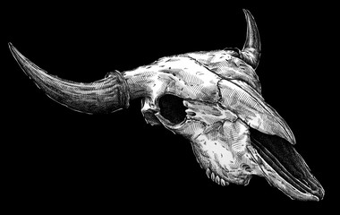 Engrave isolated cow skull hand drawn graphic illustration
