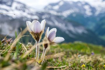 Natur, Tiere, Wandern, Freizeit, Erleben, Abenteuer, Alpen, Schwarzwald