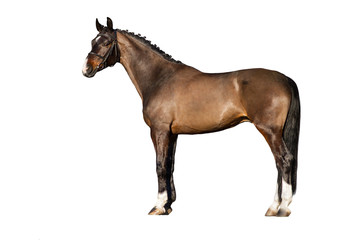 Bay horse exterior isolated on white background